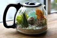 Çaydanlıktan terrarium yapımı