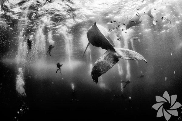 """Yarışmanın birincisi seçilen fotoğraf: """"Whale Whisperers"""" Anuar Patjane Roca Partido, Meksika"""
