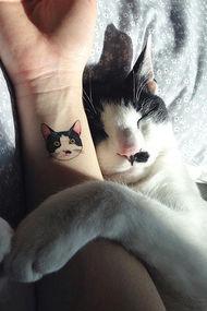 En güzel kedili dövmeler