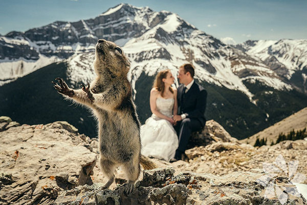 En komik düğün fotoğrafları