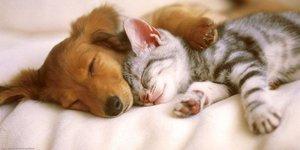 Kedi ve köpek sevenler arasındaki 10 fark