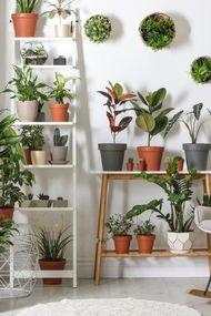 Evde bitki yetiştirme rehberi
