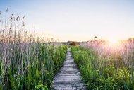 Doğada yürümek, ruh sağlığınıza çok iyi geliyor!