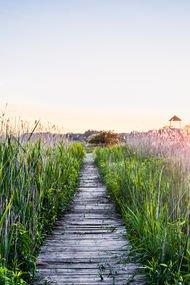 Doğada yürümek, ruh sağlığınıza çok iyi geliyor