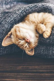 Sizin uyku pozisyonunuz hangisi?