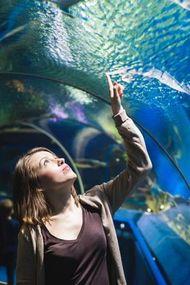 Sakinleşmek istiyorsanız balıkları izleyin