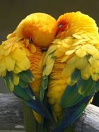 Aşık olmanın üzerinizdeki fiziksel ve duygusal etkileri