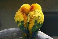 Aşkın üzerinizdeki etkileri