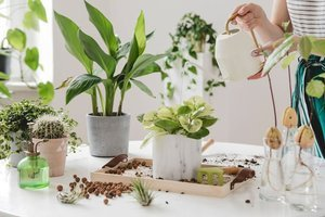 Evde çiçek bakımının 6 püf noktası