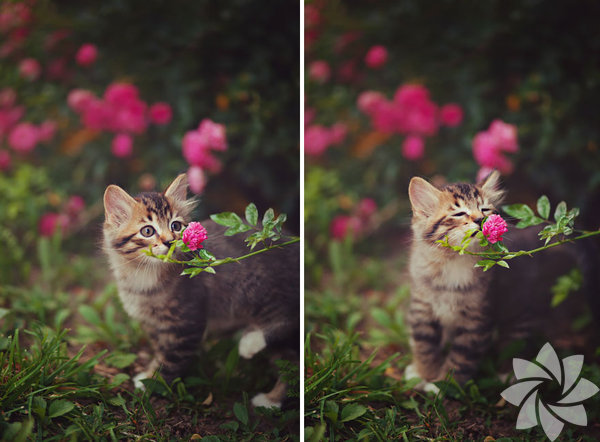 Çiçekleri koklamak ve onlarlarla ilgilenmek sanki bir terapi gibi.