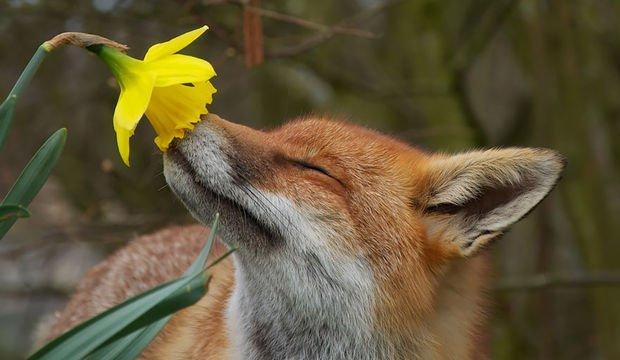 Çiçekleri kim sevmez?