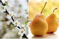 Meyve ve sebzelerin çiçekleri ile tanışın