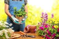 Bahçenizde hünerlerinizi gösterin!