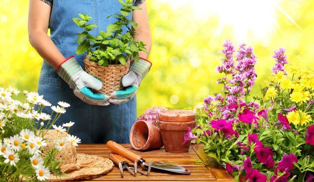 Bahçenizde hünerlerinizi gösterme zamanı