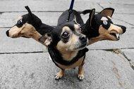 Bu köpekler çok korkunç