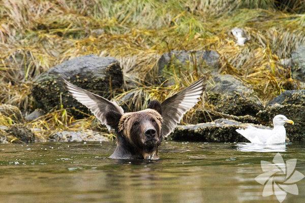 Fotoğraf:Adam Parsons 2015'in en komik vahşi doğa fotoğrafları