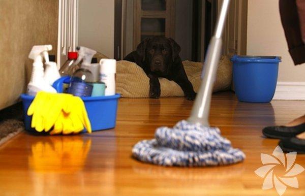 Fazlasıyla zaman kazanırsınız.Küçük evi temizlemenin en güzel avantajı belki de budur. Günde bir kez kendi arkanızı toplamanız muhtemelen beş dakikanızı alacaktır. Sadece bunu yaparak bile evinizi sürekli temiz tutabilirsiniz.