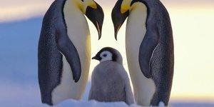 Anneyle baba arasındaki 10 temel fark