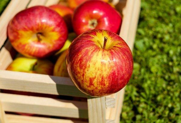 Elma  Günde 2-3 tane elma yemek şişkinlik sorununuzu ortadan kaldıracağı gibi, sindirim sisteminizi düzenler.