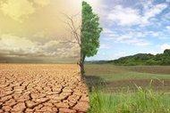 İklim değişikliği bizi hasta mı ediyor?