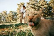 Kediler fotoğrafları trollerse...