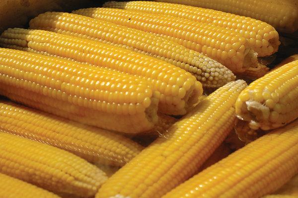 Süt mısır Geleneksel olarak üretilen süt mısırda ancak %1 oranında zirai ilaç kalıntısına rastlanıyor.