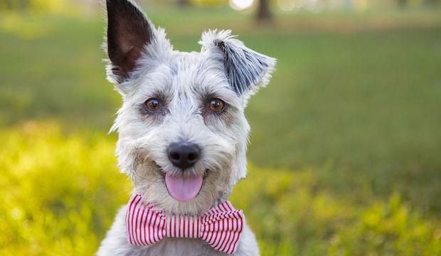 Bir köpekle yaşamaya hazır mısınız?