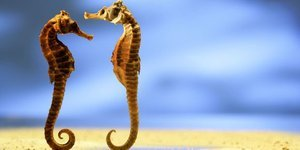 Erkek arkadaşınızdan daha romantik 10 hayvan
