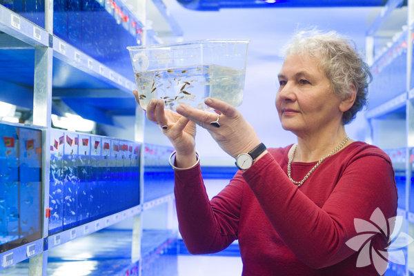 Christiane Nüsslein-Volhard: 1942 doğumlu Alman embriyologdur. Nobel Tıp Ödülü'nü 1995 yılında almıştır. Ödülü almasını sağlayan çalışmasında ise embriyonik gelişmenin genetik temellerini incelemiştir.