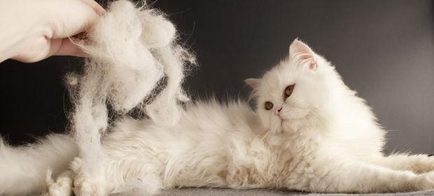 Bir kediyle yaşamaya hazır mısınız?
