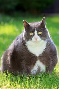 Obeziteyi iyi tanıyor musunuz?
