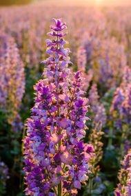 Menopoz semptomlarını hafifleten şifalı bitkiler