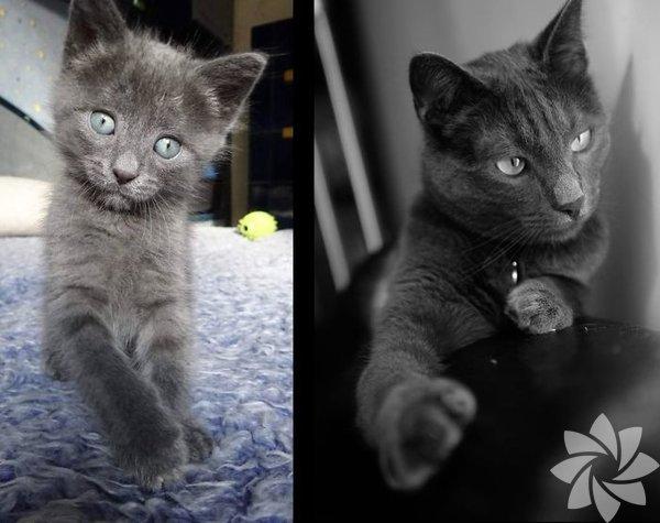 Kedilerinin büyümüş hallerini paylaşıyorlar