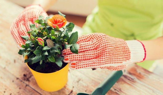 Bitkilerinize sirke verirseniz ne olur?