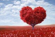 Aşk anlatıldığı kadar uzun, yaşandığı kadar kısa