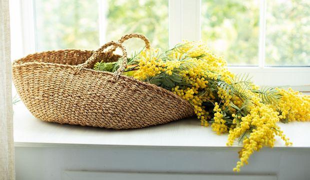 Mimoza çiçeğinin hikâyesi ve 2017 Nobel Ödülü