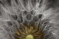 Mikroskobik güzellikler