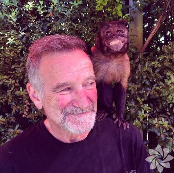 Robin Williams 1951-2014 RobinWilliams, maymunu Crystal ile birlikte olan bu fotoğrafı ölümünden 20 gün önce Instagram'a yüklemişti. Ünlü oyuncu 63 yaşında intihar etti.