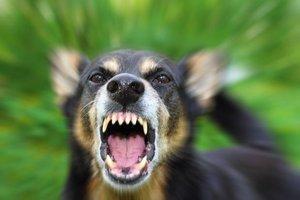 Köpek saldırısına karşı ne yapılmalı?