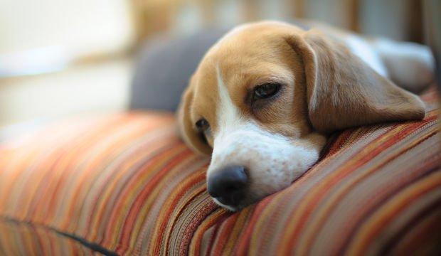 Kış yorgunluğu nasıl atılır?