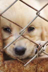 Umut verici haber: Hayvanlar koruma altına alınıyor!