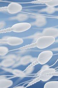 Sperm mıknatısı ile gebelik şansı artıyor